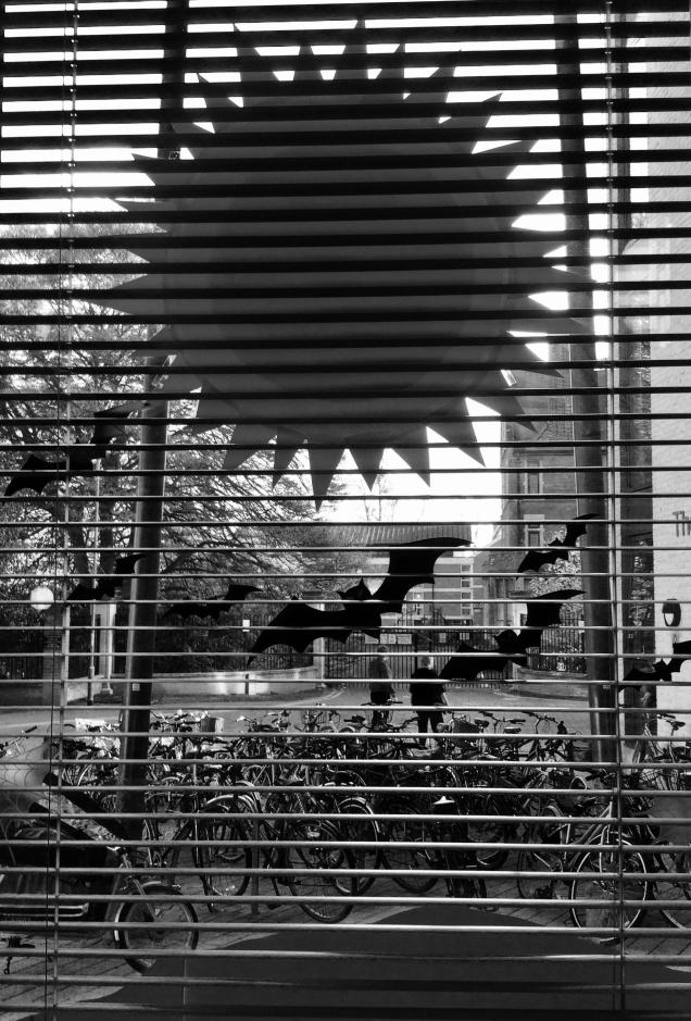 Oct - Bat window